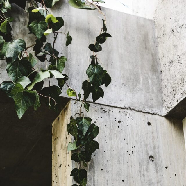 Happy first day of summer! At EAT.... we bloody love concrete! 🤤 📸 @derek_swalwell #eatmovinghouse #architectseat® #architecture #concrete #summer